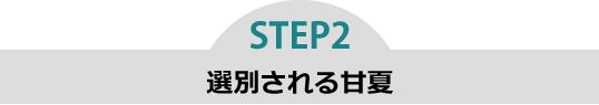 step2 選別さえる甘夏