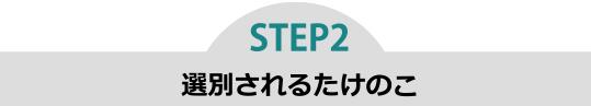 step2 選別されるたけのこ